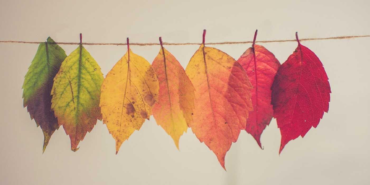 Cada proceso de cambio es como una obra de arte: único. Y que cada organización es un mundo en sí mismo. Así que trate de no seguir un guión preestablecido. La rigidez y el cambio no son amigos